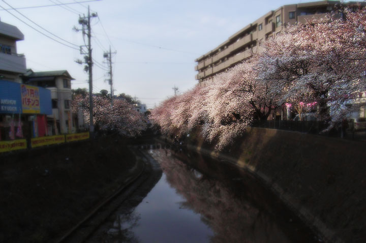 Oookagawa090403_sakura01