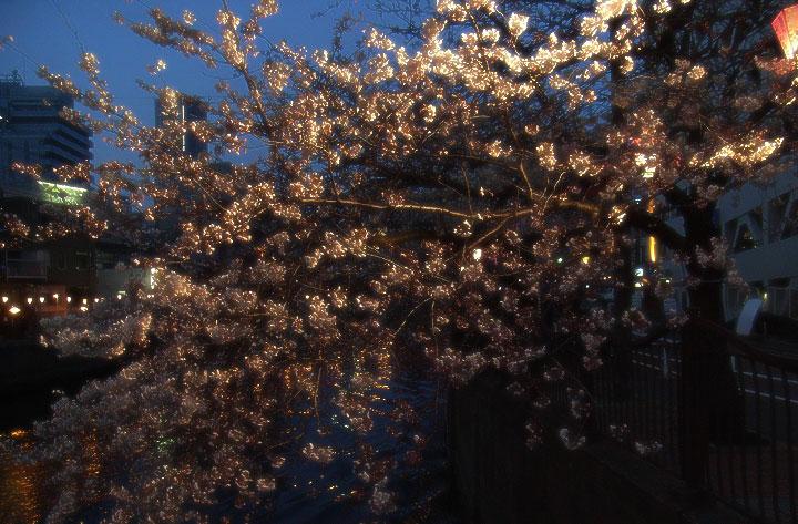 Oookagawa090403_sakura04